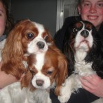 dog boarding Woodbridge CT