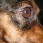 dog boarding Cheshire CT