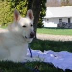 dog boarding Hamden CT