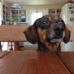 dog grooming Bethany CT