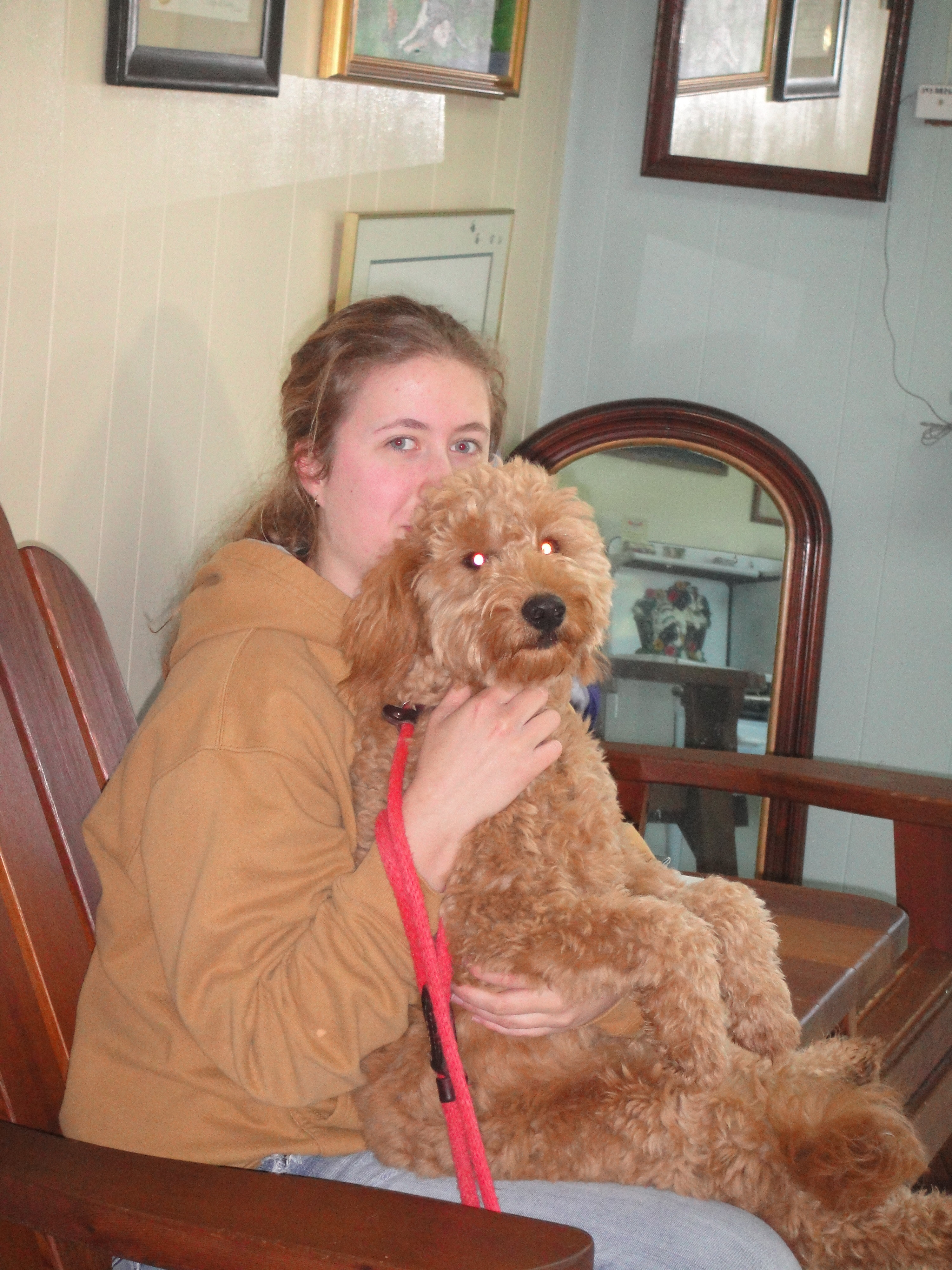 dog grooming Cheshire CT