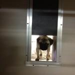 bethway kennels dog boarding